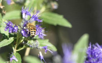 Ohne Insekten Magerkost und Schimmel