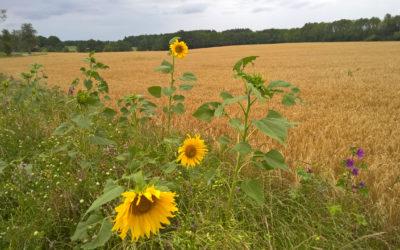 Artenvielfalt durch die Arbeit der Bauern