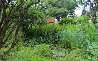 Tipps für naturnahes Gärtnern