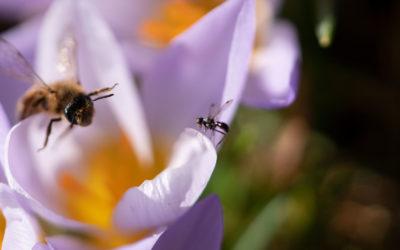 Artenvielfalt ins Grundgesetz