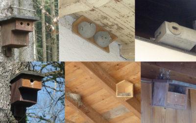 Nisthilfen für Vögel – ein Beitrag zum Artenschutz
