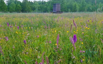 Artenvielfalt durch Landwirtschaft